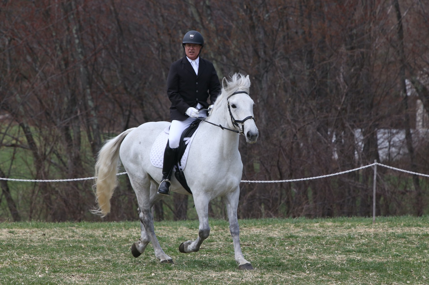 Dressage and Learning | Professor Lipshaw